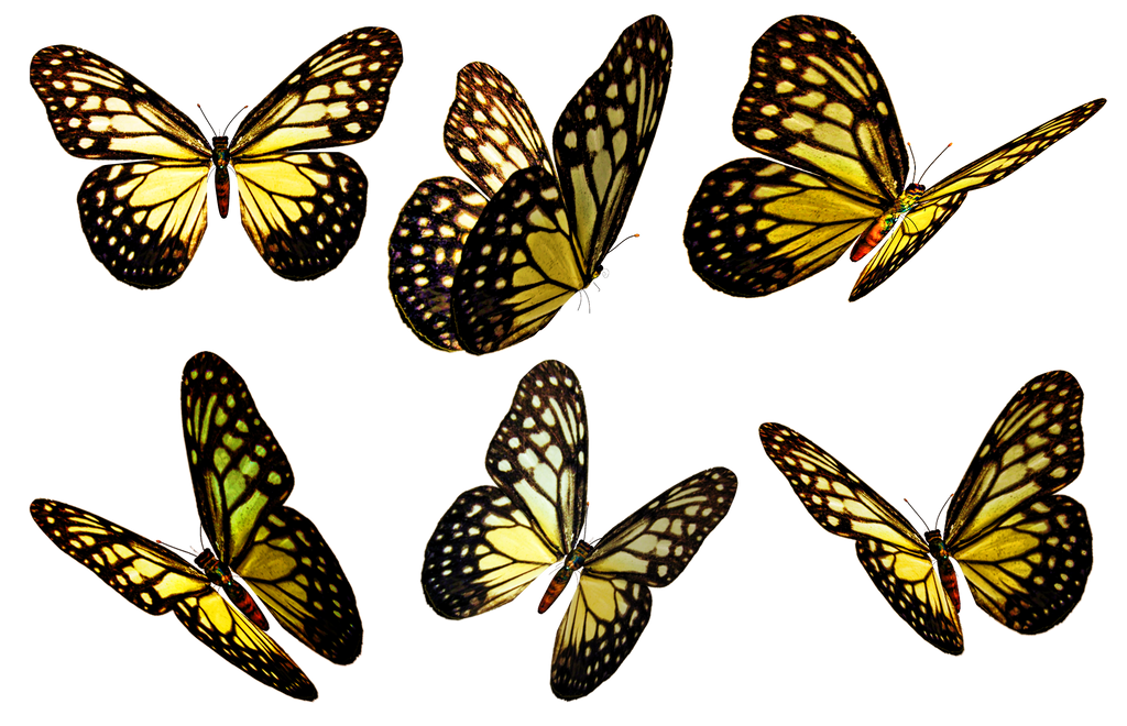 Butterflies 5 PNG Stock by Roy3D