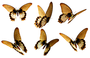 Butterflies 6 PNG Stock by Roy3D