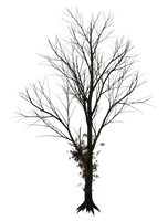 Dark Trees PNG Stock 08 by Roy3D
