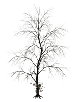 Dark Trees PNG Stock 10 by Roy3D