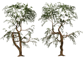 Trees 04 PNG Stock by Roy3D