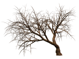Trees 11 PNG Stock by Roy3D