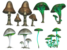 Magic Mushrooms PNG Stock by Roy3D