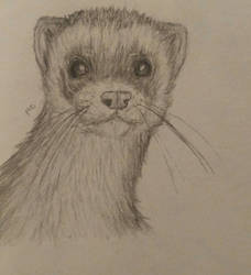 Old ferret drawing 2 by TwoFaceBatman83
