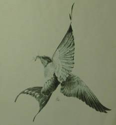 Barn Swallow by FkWalcher