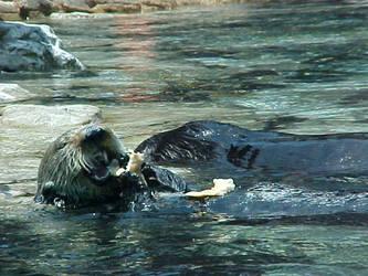 Sea Otter Love by jesthestar