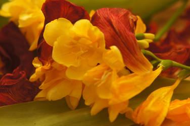 Orange flowers by ALP-Dreams