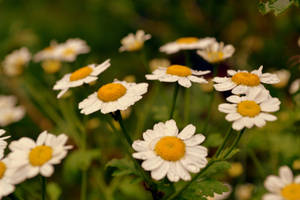 Flower by DanielTreep96