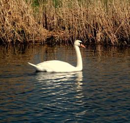 Swan Lake by RandomLollipop27