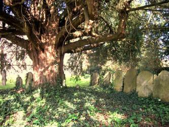 Tree Graves by RandomLollipop27