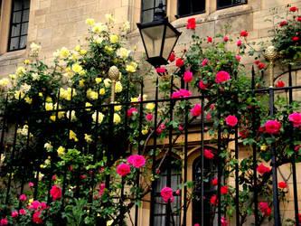 Roses in Oxford by RandomLollipop27