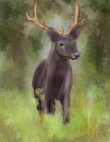Fallow Deer by glomska