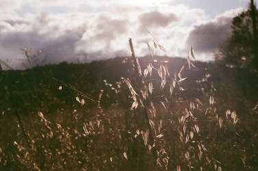 -Sunshine- by Supremerain