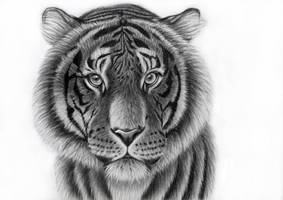 Tiger profile by Takas15
