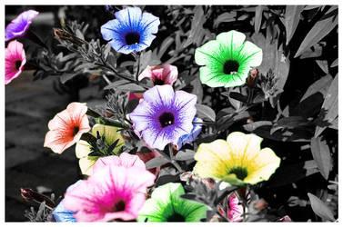 Blossoming Pride - Dureku by dapride