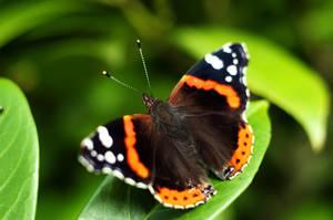 Butterfly by Vent-Tris-Pot-Temps