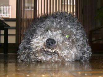 La cabeza de mi perro by Chikedor