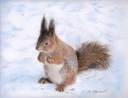 Snow squirrel by Julemus