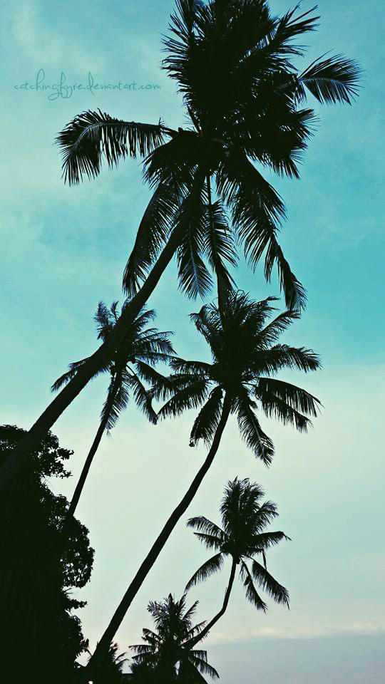 Palms by catchingfyre