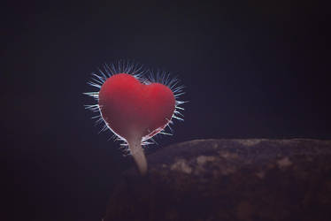 A lonely heart by philatmeartwork