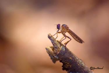 Mini Robberfly by philatmeartwork