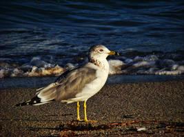 Beach Bird by Crazito