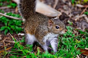 Upset Squirrel by Crazito