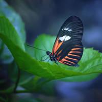 Butterfly III by Steeeffiii