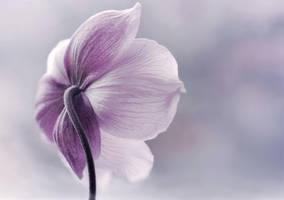 softness by Steeeffiii