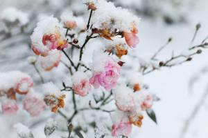 winter by Steeeffiii