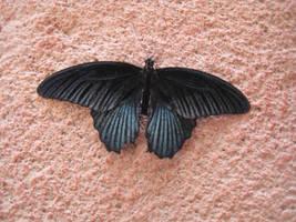 Butterfly by emilycreates