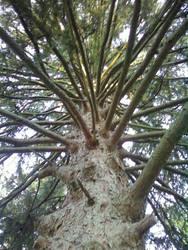 Pine Spindles by FettFan79