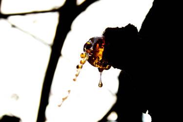 Golden juice. by AdamoN