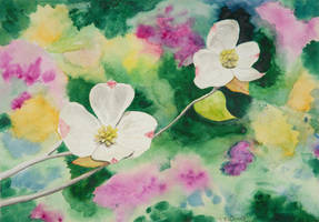 Dogwood Blossom Painting by teddiem