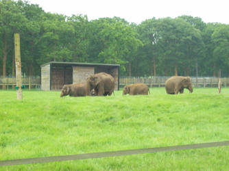 Woburn's Elephants by KingLeoLionheart
