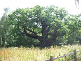 The Major Oak of Sherwood Forest by KingLeoLionheart