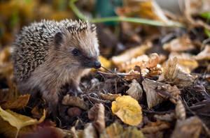 Autumn's Fauna by halb-leben