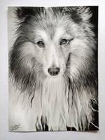Dog- drawing by CorinnaMariaArt