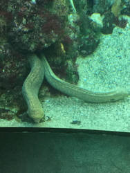 Underwater life by 12doctors