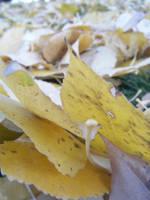Fallen Leaves by THISxISxMYxNAME