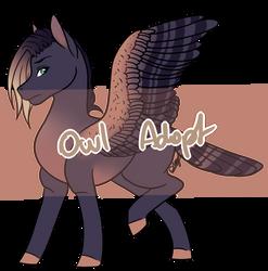 Pony Owl Adopt [CLOSED] by Drago-Draws