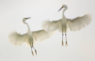 Aerial Ballet by FForns