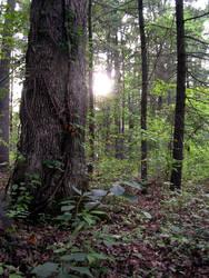 Nature's light creeps in by shutterbugrunner