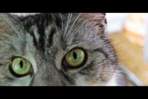 Curious eyes by IvyTinwe