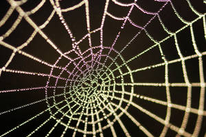 Water webs by Grayda