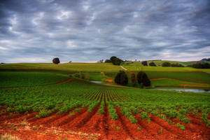 Fertile soils by Grayda
