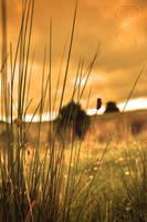 Sunset fields by Grayda