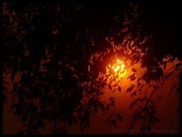 Bushfires by Grayda