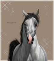 Velvet Horse by Pockypoire