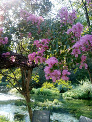 Summer flower tree by foxmarina